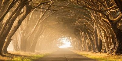 Auringon valaisema tie, jota puut ympäröivät.